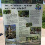 Auen-Wildnispfad in Neuried Altenheim – zu Fuß durch die Rheinauen