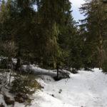 Schneeschuhwanderung von der Unterstmatt über den Hochkopf zum Hundseck und rund um den Mehliskopf