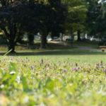 Bürgerpark - Bäume im Blickwinkel einer Ameise