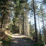 Nebelflucht aus Offenburg – Wanderung vom Mummelsee über das Seibelseckle, zum Wildsee, Ruhestein und zurück