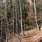 Rundwanderung von Gengenbach / Haigerach Waldparkplatz zum Mooskopf / Siedigkopf / Lothardenkmal und über die Kornebene / Ameisenweg zurück