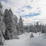 Tiefschnee an der Hornisgrinde - Schneeschuhwanderung von der Unterstmatt zum Hundsrücken - Hundsbach und um den Biberkessel über die Hornisgrinde zum Mummelsee