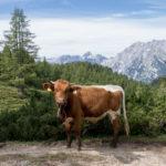 Urlaub im Berchtesgadener Land - 2 Wochen in Bayern